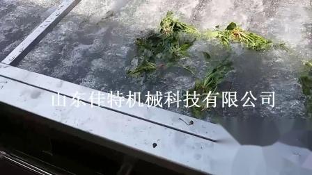 白菜清洗机 鼓泡式果蔬清洗机