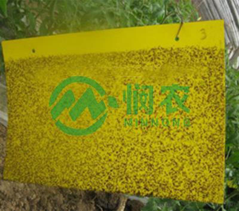 GT-ZCB大棚/温室/菜地 /茶园高效粘虫黄板
