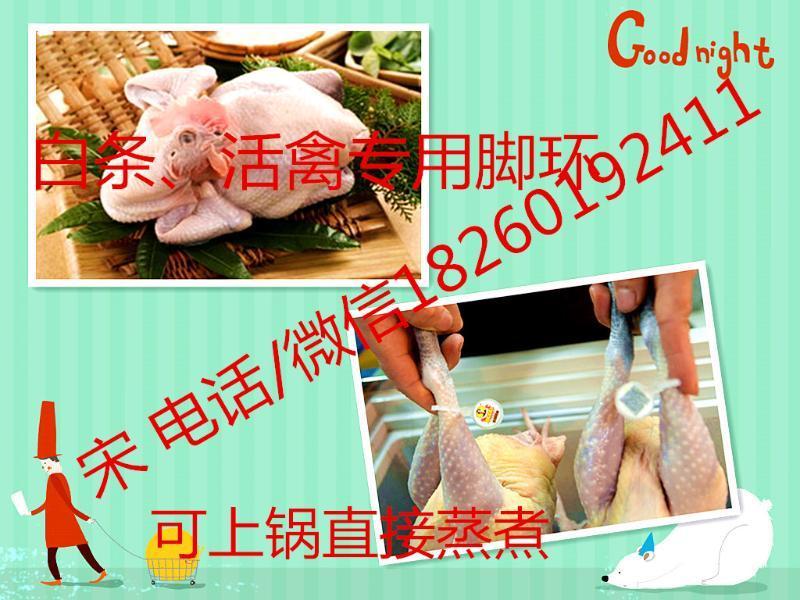 食品安全可溯源系统方案 鸡鸭鹅佩戴脚环追溯