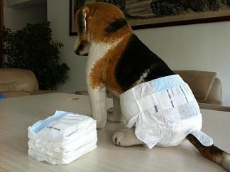 宠物纸尿裤