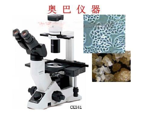 奥林巴斯CKX41倒置荧光相差显微镜