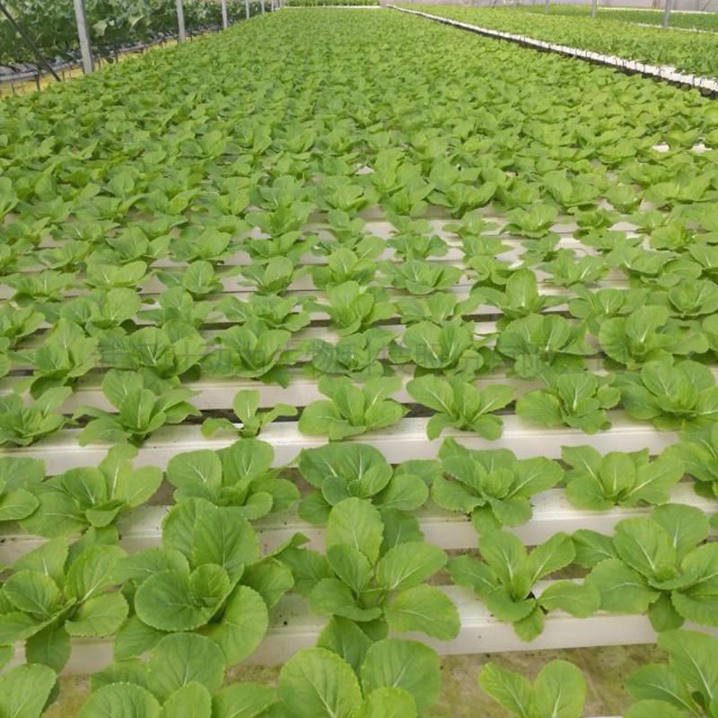 温室大棚 平铺式管道栽培 水培设施