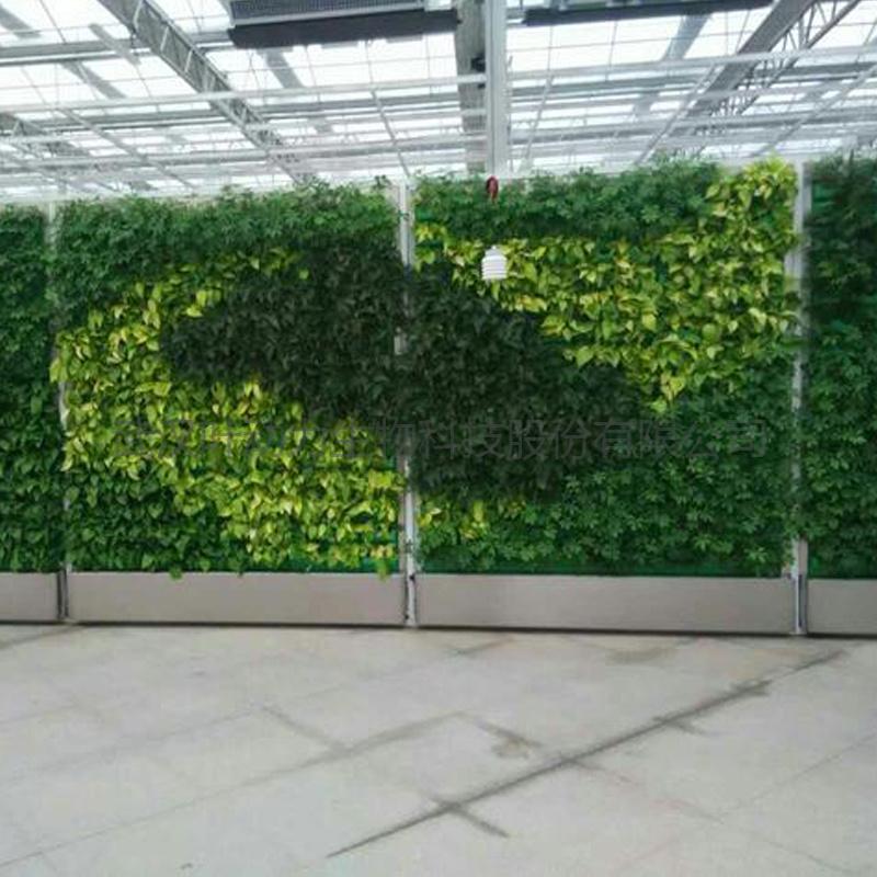 温室垂直种植壁挂式组合花盘立体水培植物墙