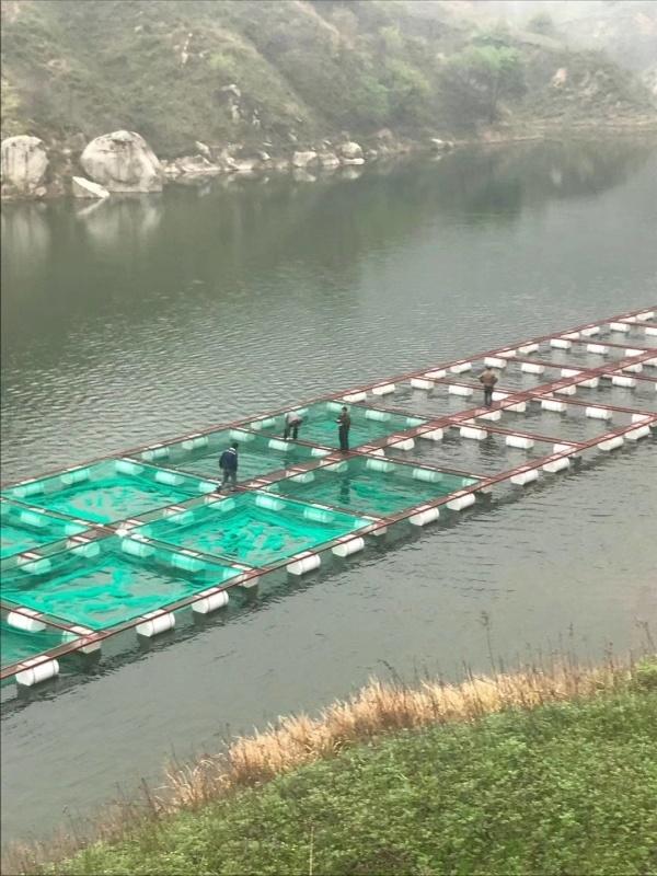 养鱼小网箱 水上网箱 淡水网箱养鱼