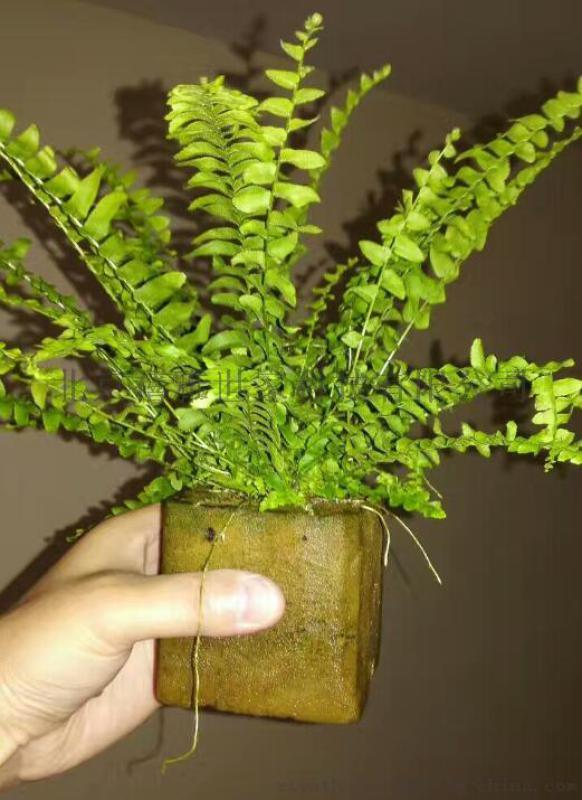 小森林-智能养护无土栽培植物绿墙,墙体绿化