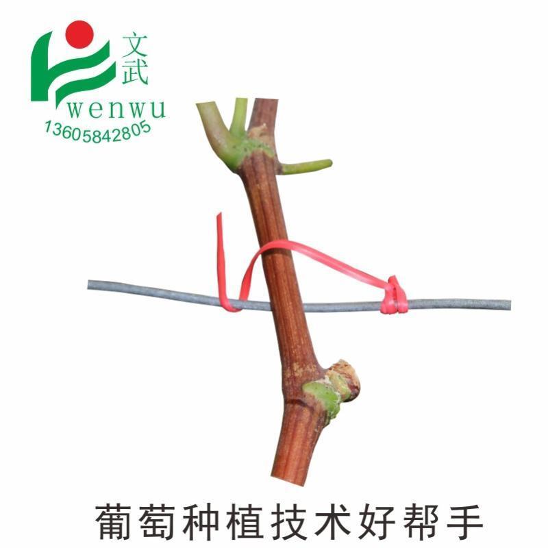 葡萄枝条扎丝 园林绑扎线 葡萄藤蔓捆绑带扎提子藤枝条绑枝塑铁丝